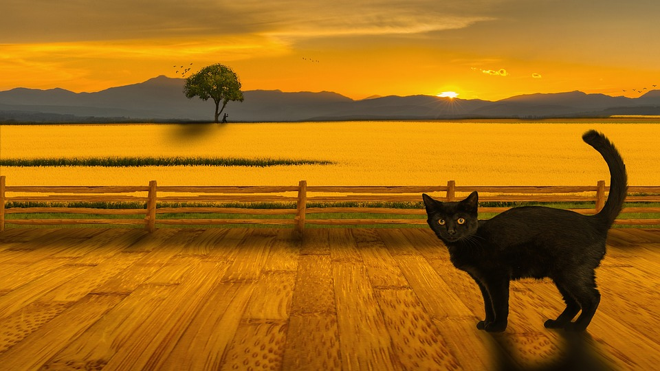 Paisajes Wallpapers Full Hd Cat Landscape Sunset 183 Free Image On Pixabay