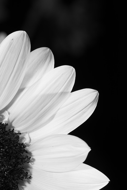Car Photos Wallpaper Free Download Flower Black And White Profile 183 Free Photo On Pixabay