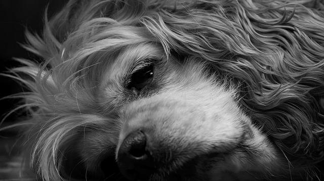 Cute Pet Animals Hd Wallpapers Free Photo Dog Sleeping Black And White Free Image On