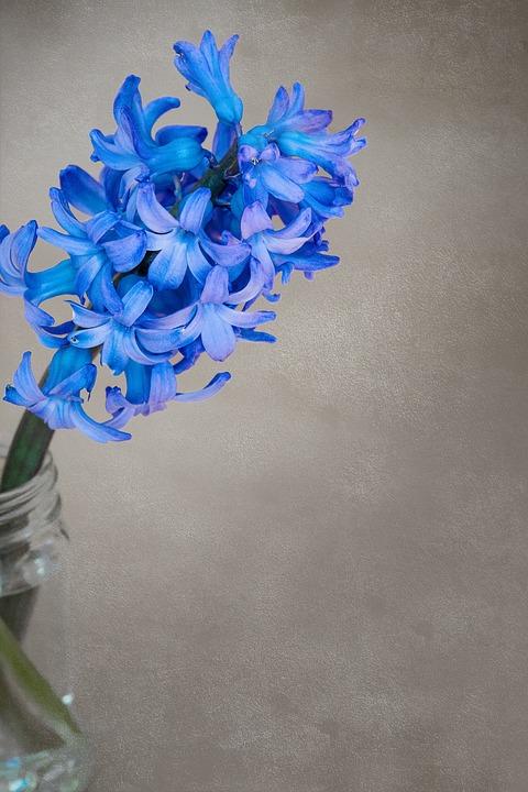 Cute Rose Wallpaper For Computer Desktop Fleur Jacinthe Fleurs 183 Free Photo On Pixabay
