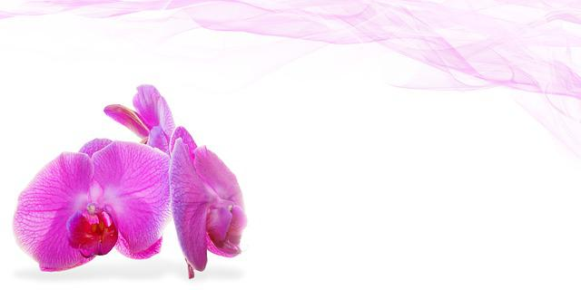 Girl Background Wallpaper Wellness Beauty Flower 183 Free Photo On Pixabay