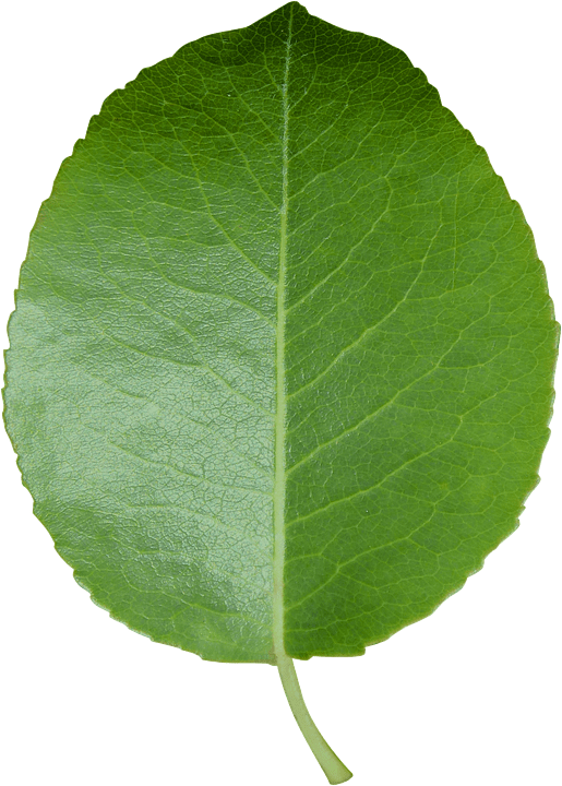 Fall In Love Leaf Wallpaper Leaf Cut Sheet Transparent 183 Free Photo On Pixabay