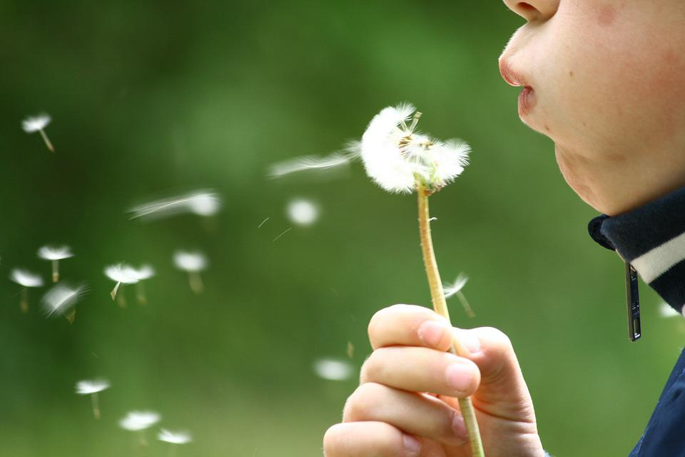 Girl Image Wallpaper Free Download Free Photo Dandelion Blowing Childhood Kid Free
