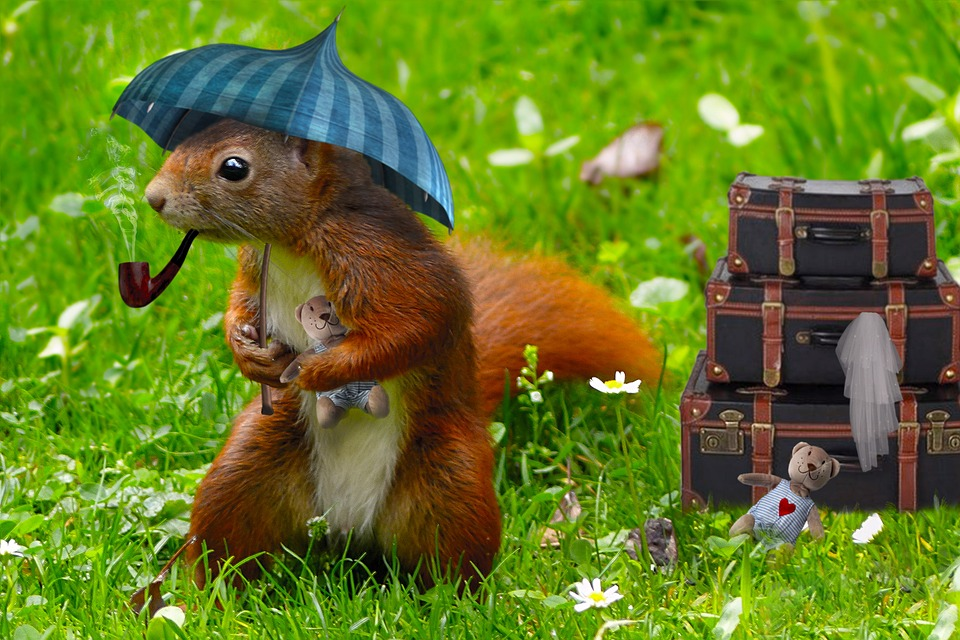 Cute Man Pictures Wallpaper Squirrel Child Decoration 183 Free Photo On Pixabay