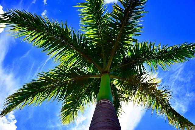 Car Sunset Wallpaper Palm Tree Blue Sky 183 Free Photo On Pixabay