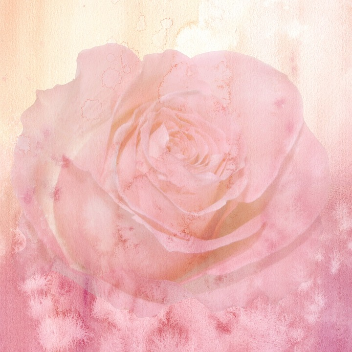 Cute Elephant Design Wallpaper Background Flower Pink 183 Free Image On Pixabay