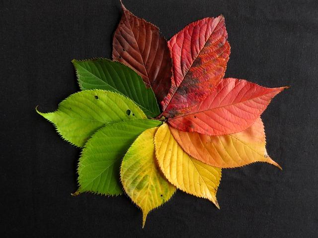 Free Fall Tree Wallpaper Free Photo Autumn Leaves Fall Leaves Autumn Free