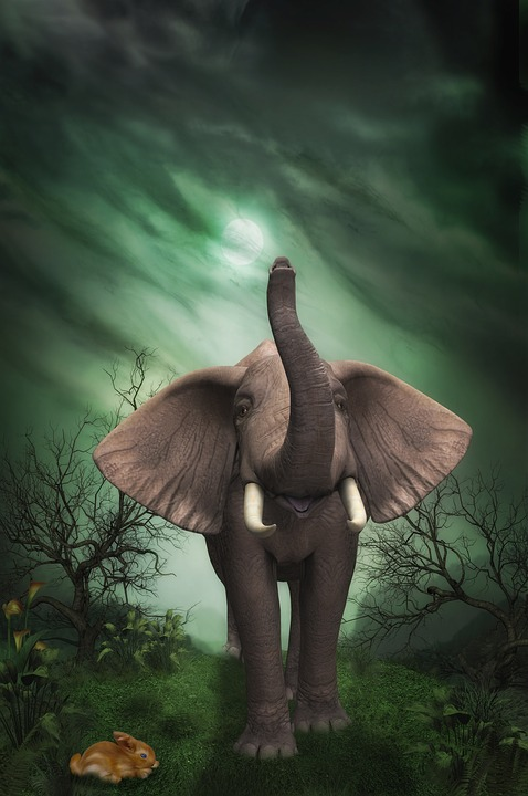 Fantasy Girl Hd Wallpaper Free Download Elephant Hare Trees 183 Free Image On Pixabay