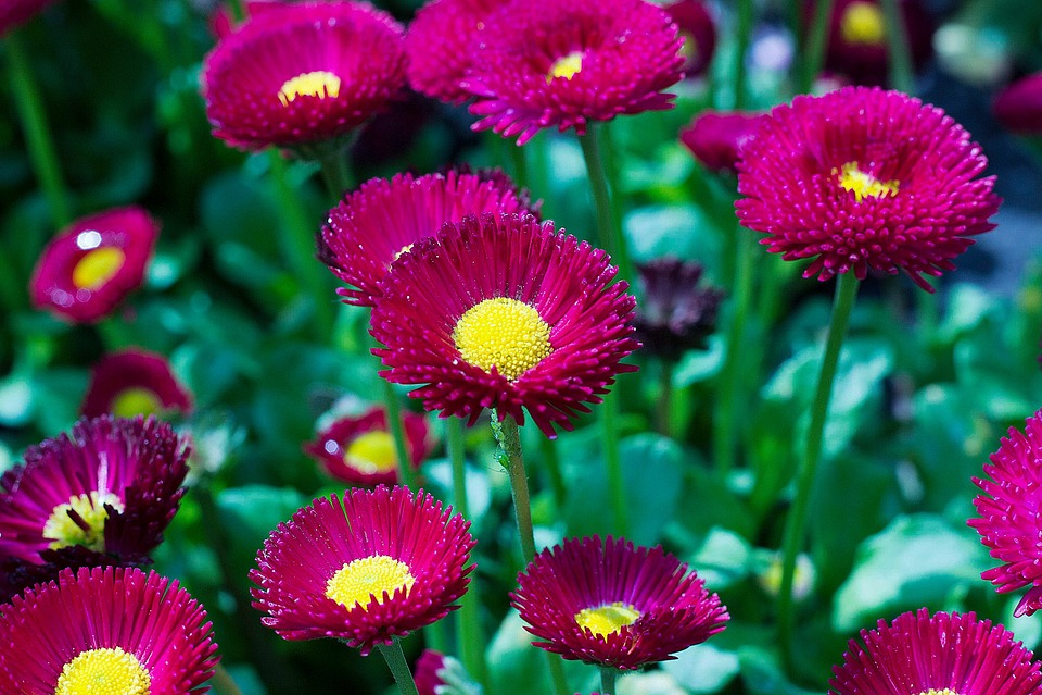 Summer Animal Wallpaper Flower Beautiful Nature 183 Free Photo On Pixabay