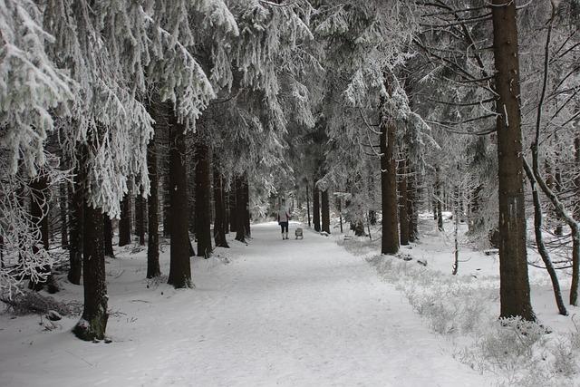Blue Wallpaper Hd Download Gratis Billede Vinterlandskab Vinter Skov Vinter
