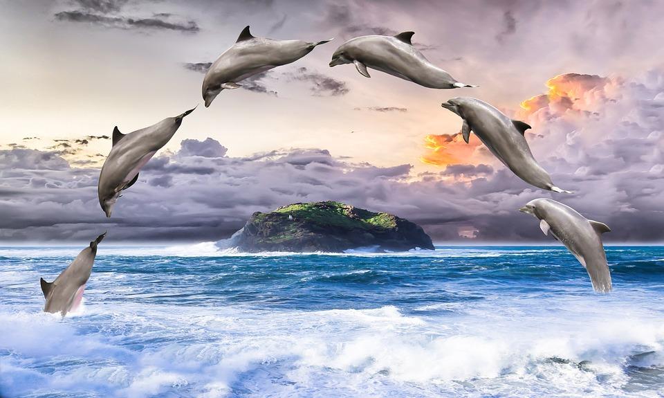 Fish Animation Wallpaper Free Download Free Illustration Dolphin Marine Mammals Pinball Free