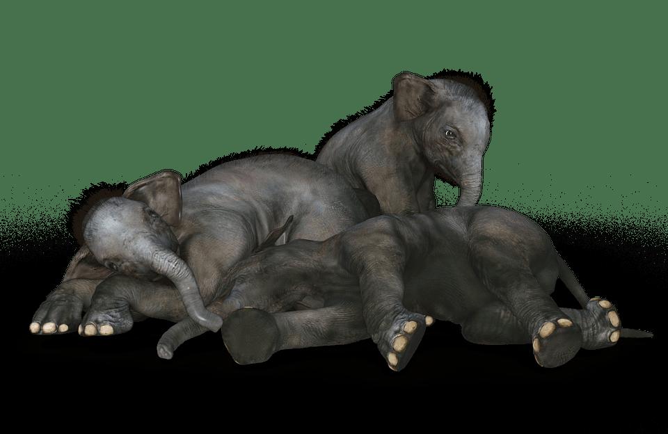 Cute Blue Wallpaper Backgrounds Free Illustration Elephant Baby Elephant Free Image On