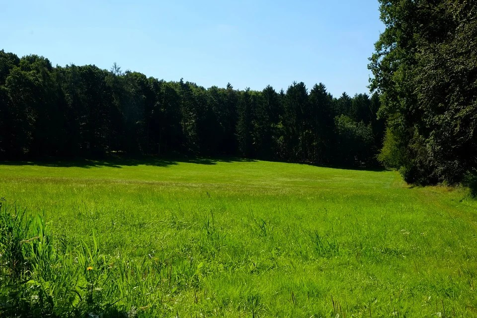 Green Animal Wallpaper Free Photo Glade Meadow Nature Forest Free Image On