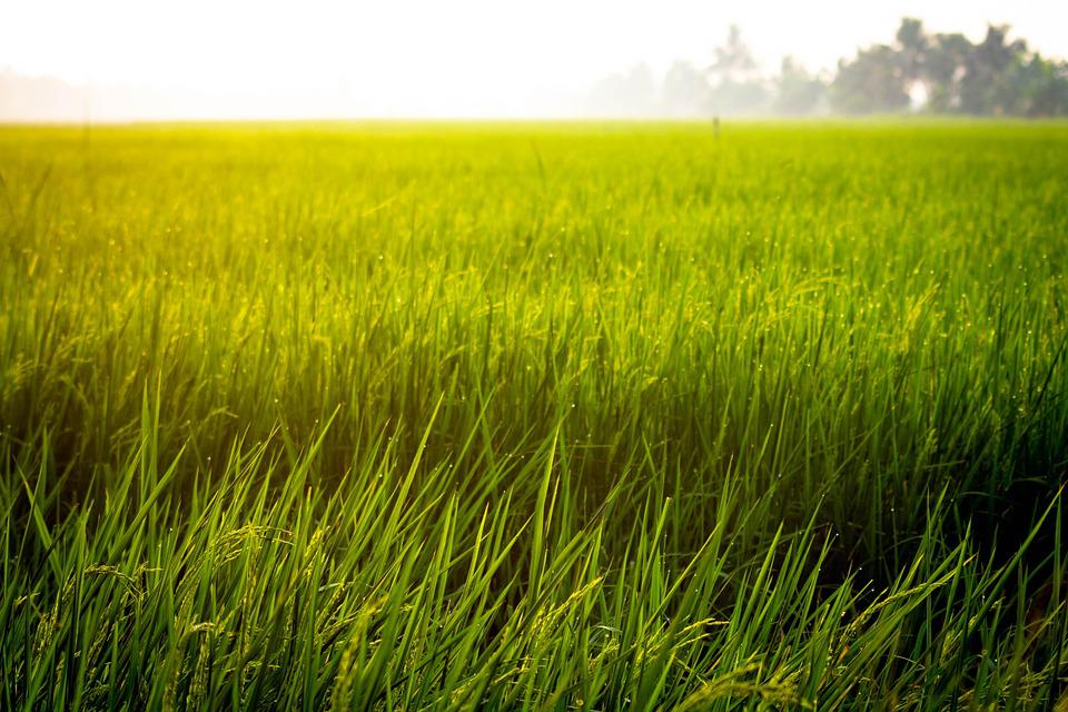 Cute Red Color Wallpaper Free Photo Farm Rice Field Asian Free Image On