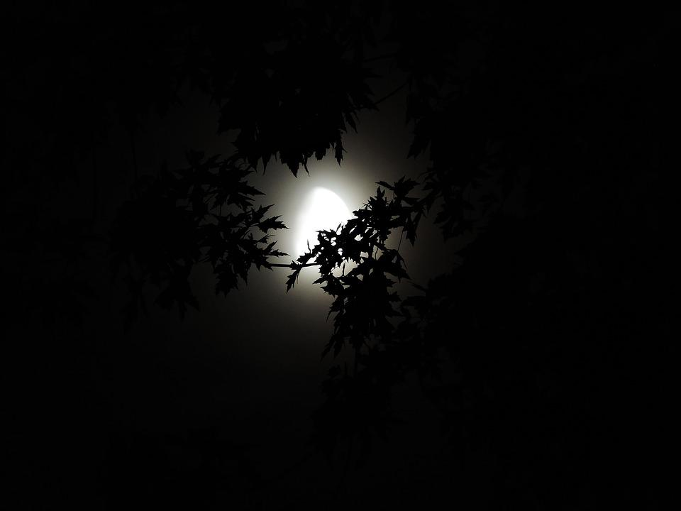 Fall Aesthetic Wallpaper Free Photo Moonlight Through Trees Moonlight Free