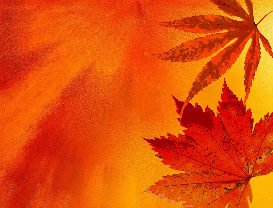 Fall Themed Iphone Wallpapers Autunno Sfondo Colori D Autunnali 183 Immagini Gratis Su Pixabay