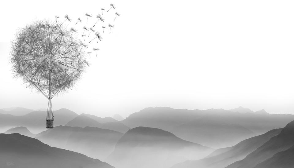 Black Wallpaper 1920x1080 Free Illustration Dandelion Wind Fly Nature Plant