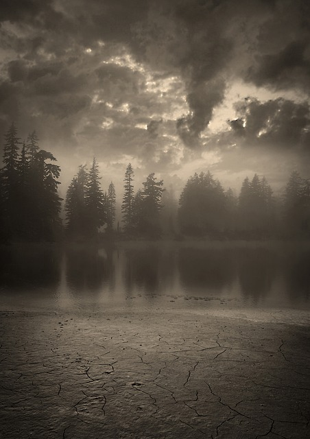 Background Wallpaper Hd Fall Fog Free Photo Forest Night Dark Moon Free Image On
