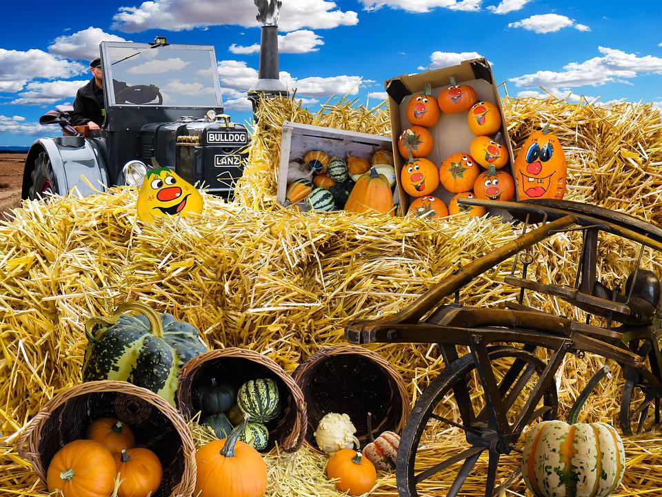 Fall Wallpaper 4k Free Photo Autumn Pumpkins Harvest Free Image On