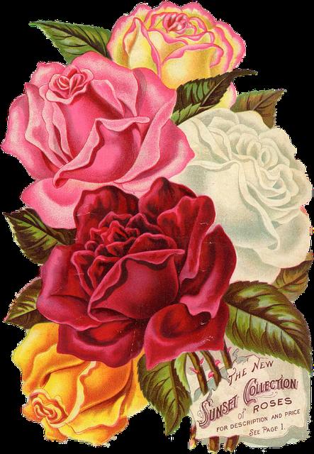 1950s Car Wallpaper Red Rose Vintage 183 Free Image On Pixabay