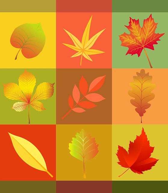 Fall Leaves Pictures Wallpaper Free Vector Graphic Autumn Leaves Colorful Free Image