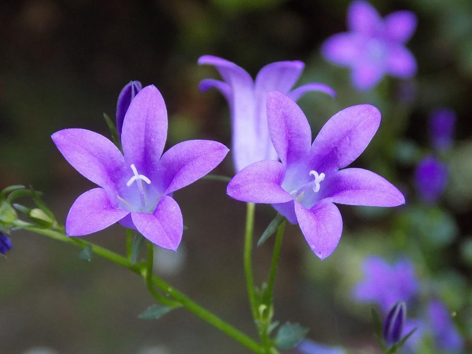 Wallpaper Tattoo 3d 제비꽃 Violaceae 바이올렛 183 Pixabay의 무료 사진
