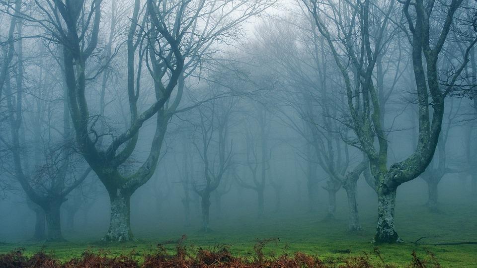 Hd Autumn Desktop Wallpaper Free Photo Dream Forest Dim Free Image On Pixabay