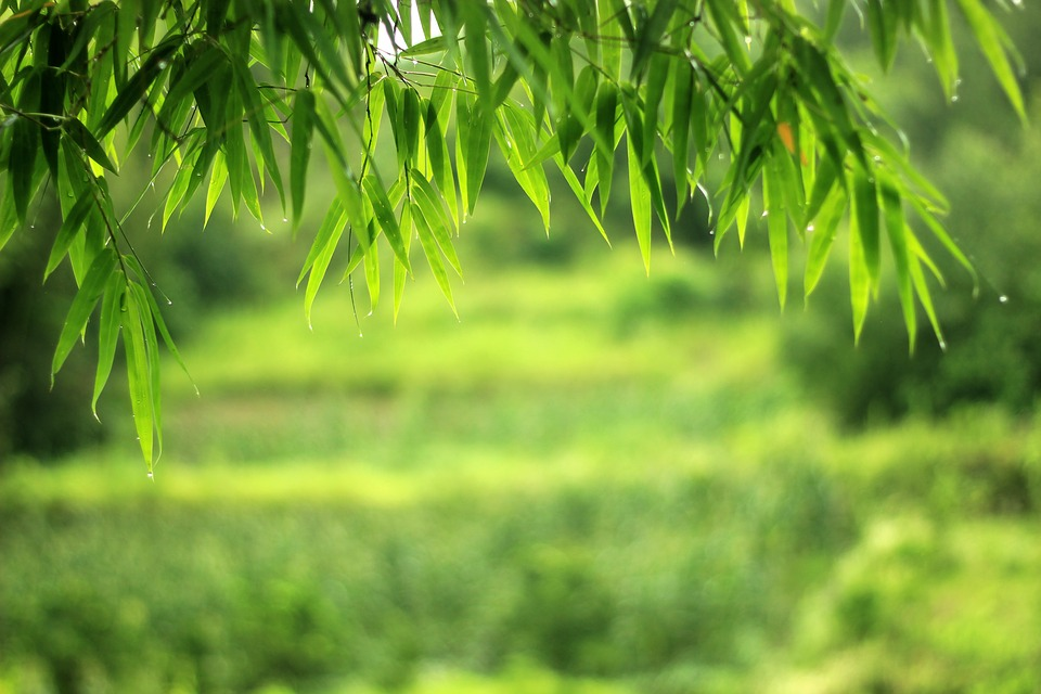 Wallpaper Black Green Free Photo The Scenery Bamboo Wallpaper Free Image On