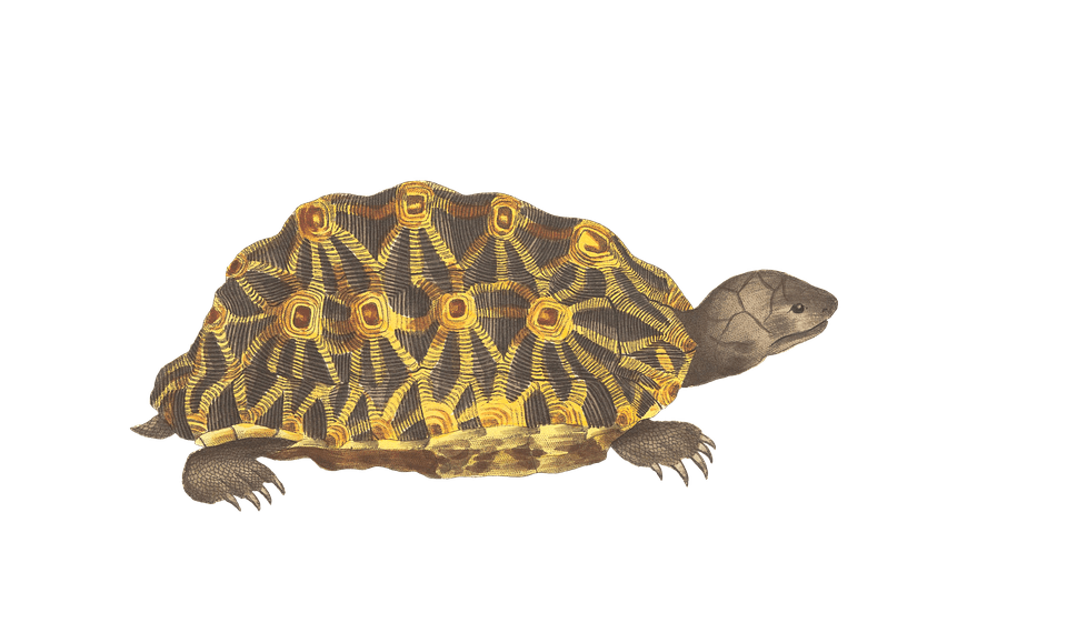Cute Vintage Wallpaper Turtle Animal Reptile 183 Free Image On Pixabay