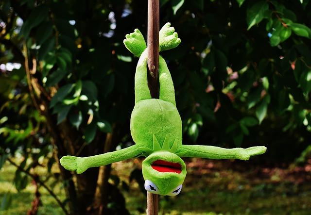 Green Animal Wallpaper Pole Dance Kermit Funny Soft 183 Free Photo On Pixabay