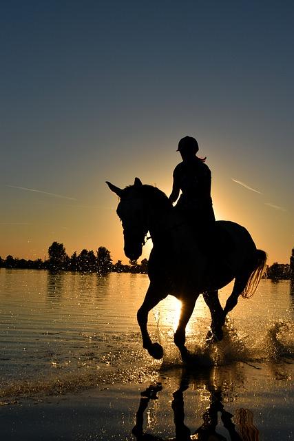 Biker Girl Wallpaper Free Download Free Photo Horse Sea Gallop Sunset Water Free Image