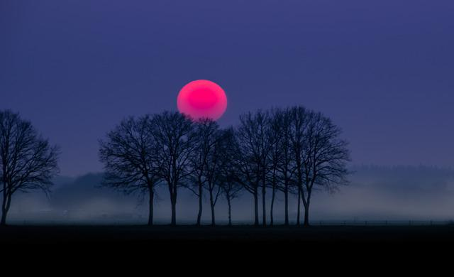 Tree Girl Wallpaper Dark Free Photo Red Sun Fog Landscape Nature Free Image