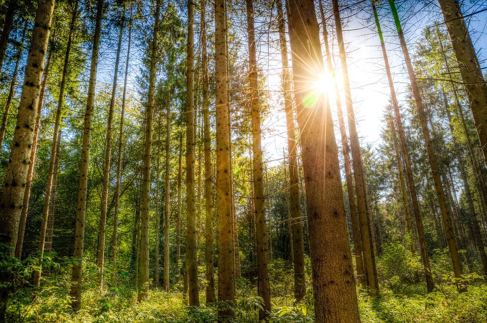 Fall Sunshine Wallpaper Forest Sunlight Trees Blue 183 Free Photo On Pixabay