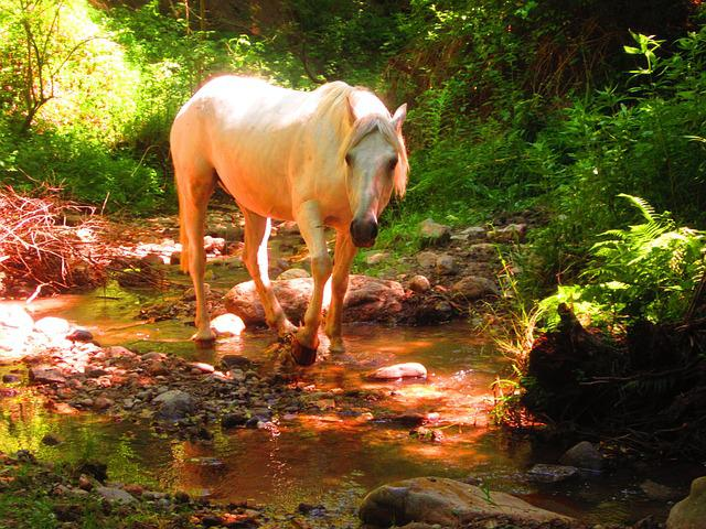 Free Winter Animal Wallpaper Free Photo White Horse Forest Nature Free Image On