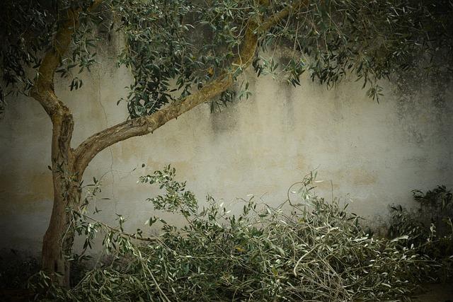 Girl And Boy Together Wallpaper Olive Tree Nostalgia Background 183 Free Photo On Pixabay