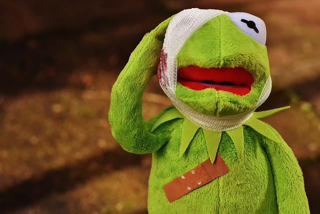 Free Animal Wallpaper Download Free Photo Kermit First Aid Injured Free Image On