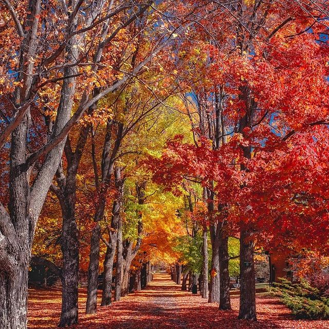 Paisajes Wallpapers Full Hd Fall Autumn Trees 183 Free Photo On Pixabay