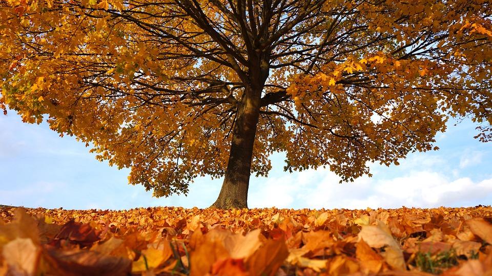 November Fall Wallpaper Herbst Baum Landschaft 183 Kostenloses Foto Auf Pixabay