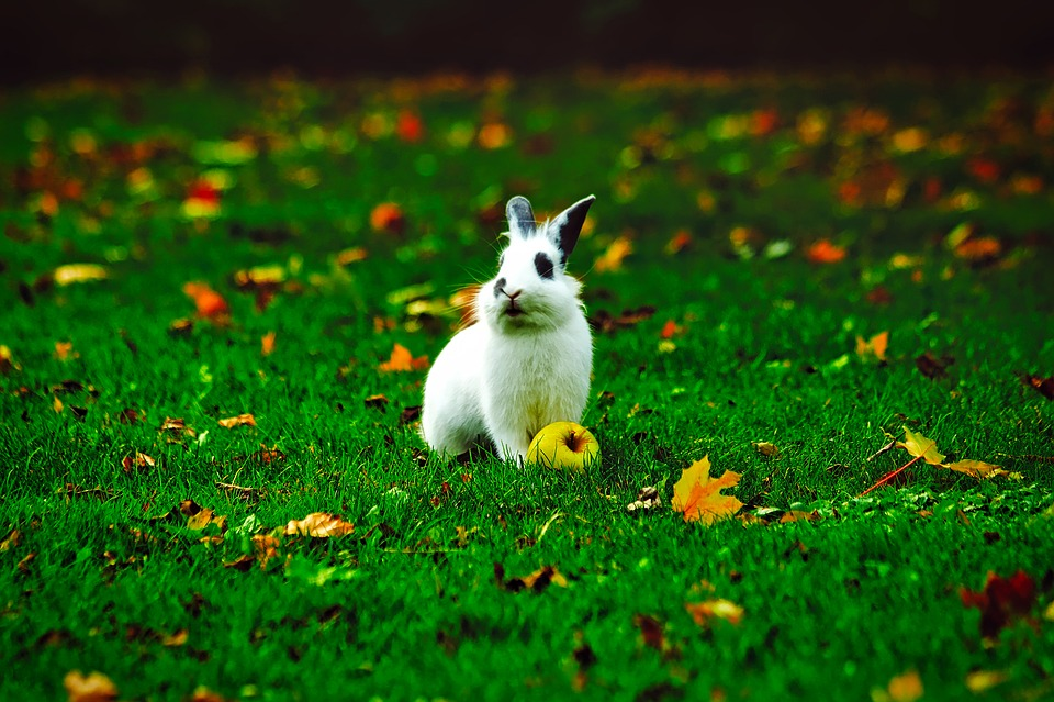 Free Fall Wallpaper With Animals Rabbit Bunny Animal 183 Free Photo On Pixabay