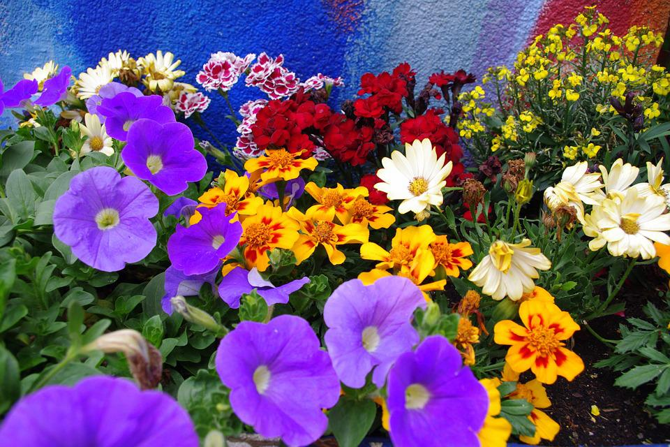 Colorful Flowers Farbenpracht B · Free photo on Pixabay