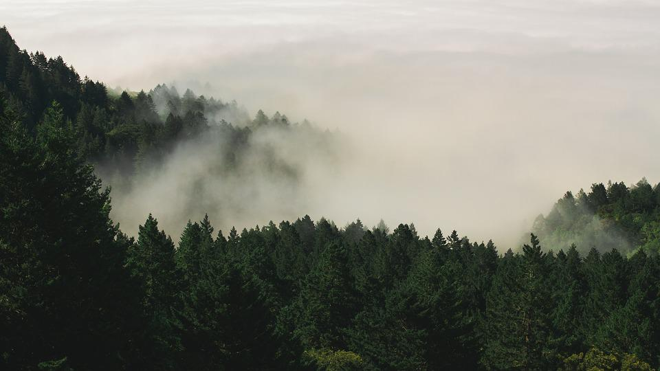 Hipster Fall Wallpaper Fog Forest Nature Pine 183 Free Photo On Pixabay