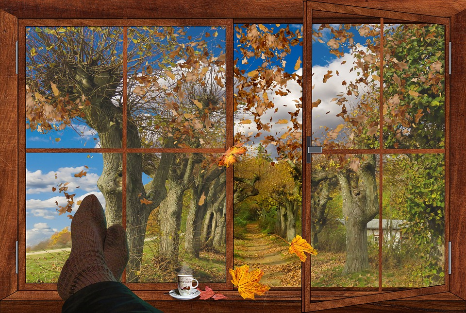 Wallpaper Leaves Falling Autumn Window Fall Foliage 183 Free Image On Pixabay
