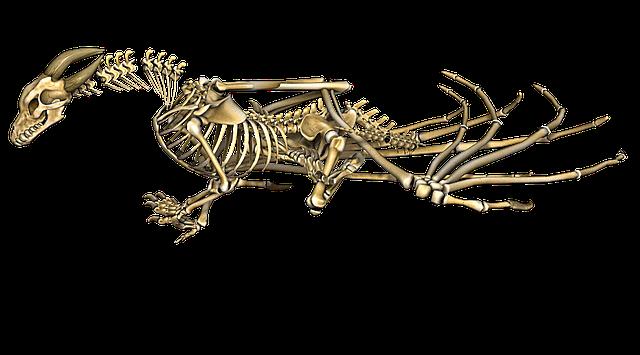 Love Animation Wallpaper Dragon Skeleton Wings 183 Free Image On Pixabay