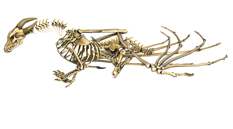 3d Love Wallpaper Dragon Skeleton Wings 183 Free Image On Pixabay