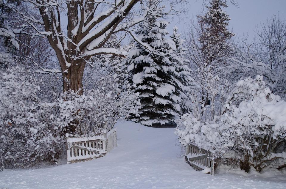 Nature Animal Wallpaper Hd Winter Wonderland Snow 183 Free Photo On Pixabay