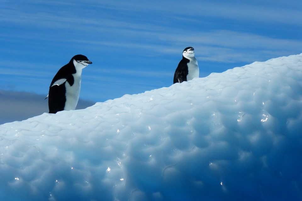 Funny Hd Animal Wallpapers Free Photo Penguin Antarctica Birds Ice Free Image