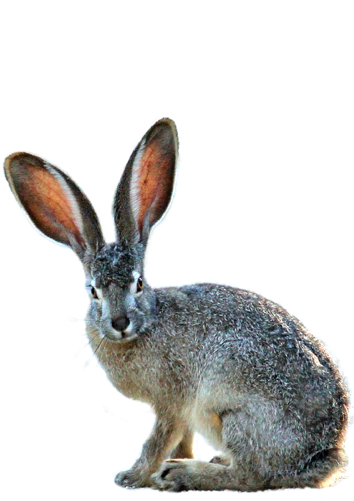 Free Fall Wallpaper Downloads Isolated Hare Nature 183 Free Photo On Pixabay