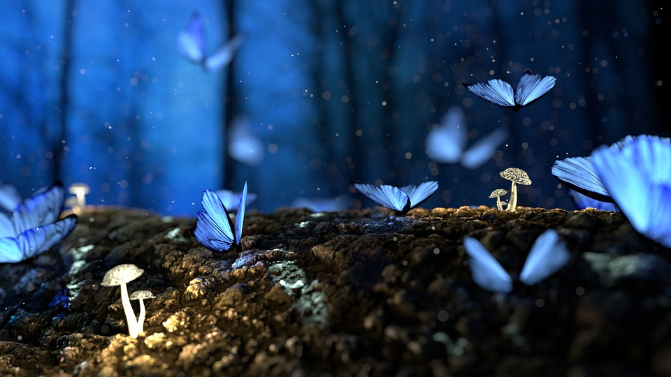 3d Wallpaper Nature Flowers Butterfly 3d Blue 183 Free Photo On Pixabay