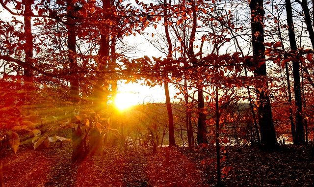 Beautiful Fall Scenery Wallpaper Free Photo Trees Sunset Fall Red Orange Free Image