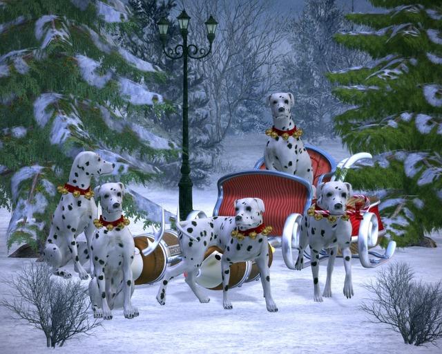 Fox Animal Wallpaper Winter Snow Season 183 Free Image On Pixabay